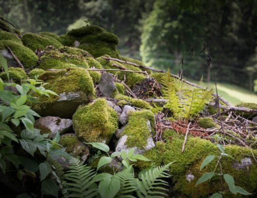 simona kossak, opowieści, przyroda, rośliny, zwierzęta, książki, czytanie, Agnieszka Gertner, agnieszkagertnerblog, architecture & gardens
