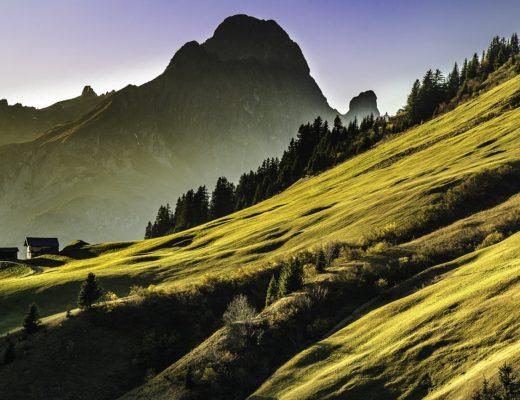 architektura krajobrazu, projektowanie ogrodów, projektowanie krajobrazu, książka, agnieszkagertnerblog, Agnieszka Gertner, Z zielonej półki