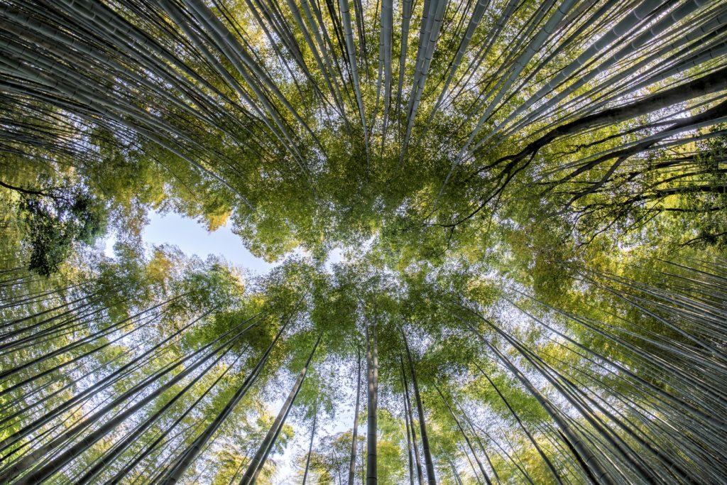 sztuka kąpieli leśnych, książka, czytanie, architecture & gardens, agnieszkagertnerblog, Agnieszka Gertner, shinrin-yoku, drzewa, las