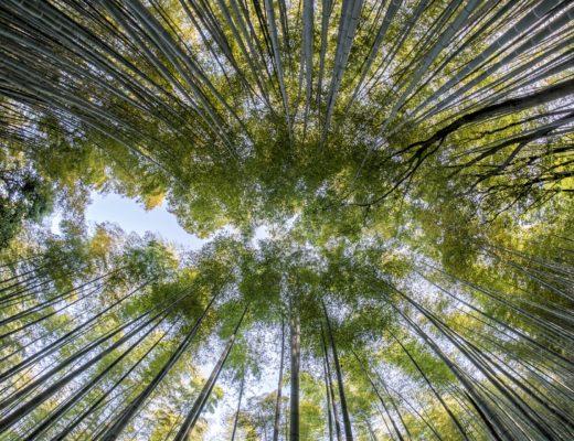 Rola nauk przyrodniczych, agnieszkagertnerblog, Agnieszka Gertner, natura, społeczeństwo, świat, przyroda, artykuł naukowy