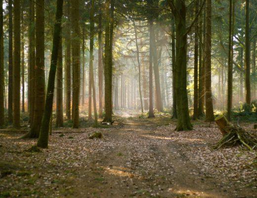 projektowanie ogrodów, projekt, ogrody, architektura krajobrazu, architektura, krajobraz, blog, przyroda, rośliny, natura, agnieszka gertner, architecture, gardens, landscape, design, las, przyroda, filozofia