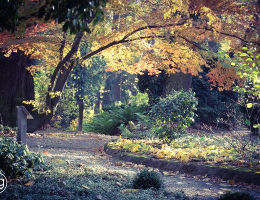 kolorowe Wojsławice, jesień, arboretum, ogród botaniczny, Wrocław, agnieszkagertnerblog, Agnieszka Gertner, projektowanie, krajobraz, przyroda