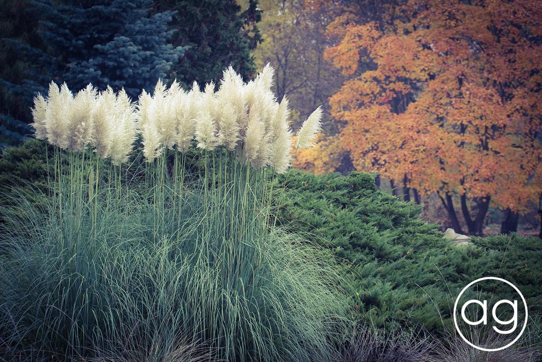 jesienny spacer, kolorowa listopada połowa, ogród botaniczny, Poznań, agnieszkagertnerblog, Agnieszka Gertner, jesień, architektura krajobrazu