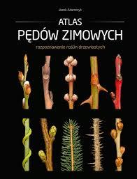 Atlas pędów, czytanie, książka, agnieszkagernerblog, Agnieszka Gertner, architecture & gardens, drzewa, pędy, rozpoznawanie
