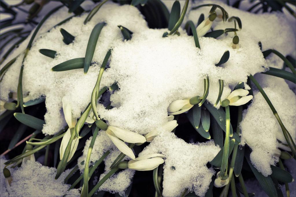 cztery twarze, wiosna, blog, inne, agnieszkagertnerblog, architecture & garden, lato, jesień, zima, Agnieszka Gertner