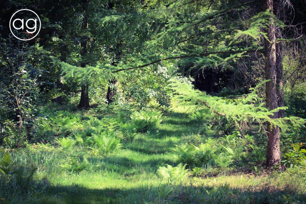 arboretum wRogowie, SGGW, agnieskagertnerblog, Agnieszka Gertner, drzewa, ogród dendrologiczny, dendrologia, wycieczka, fotografia, natura, alpinarium, kolekcje drzew ikrzewów, leśne powierzchnie doświadczalne, las naturalny, owady, entomologia