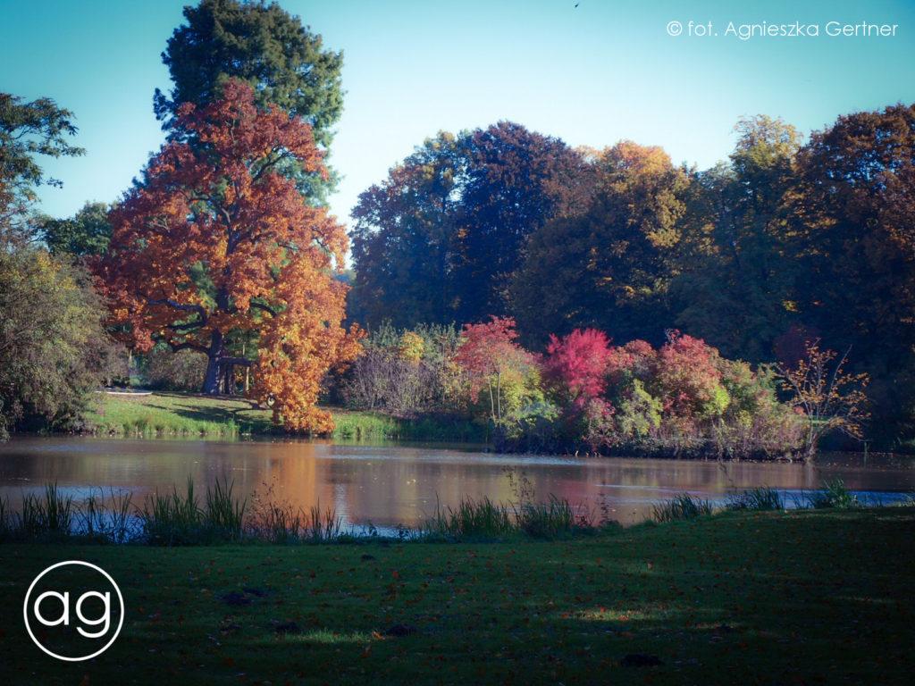 jesień, szum traw, pora roku, agnieszkagertnerblog, Agnieszka Gertner, archgitecture & gardens, szum traw