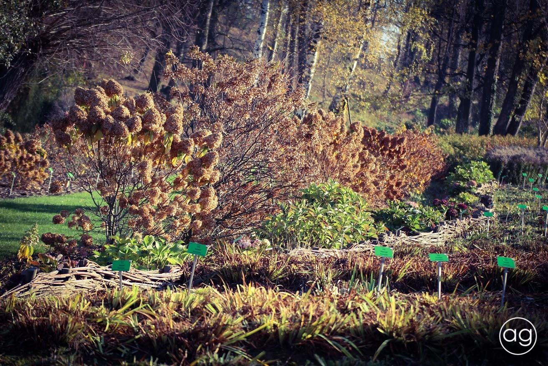 Kolorowe Wojsławice Jesienna Odsłona Arboretum W