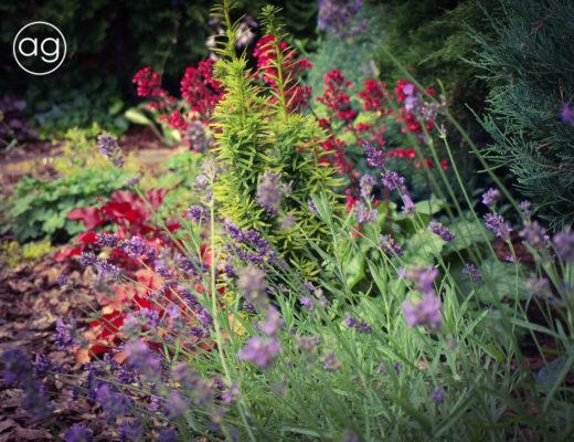 Byliny w ogrodzie, książka, czytanie, agnieszkagertnerblog, Agnieszka Gertner, architecture & gardens, perennials