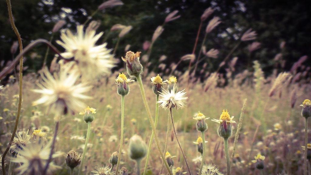 atlas chwastów, książki, czytanie, architecture & gardens, agnieszkagertnerblog, recenzja, przyroda, Agnieszka Gertner