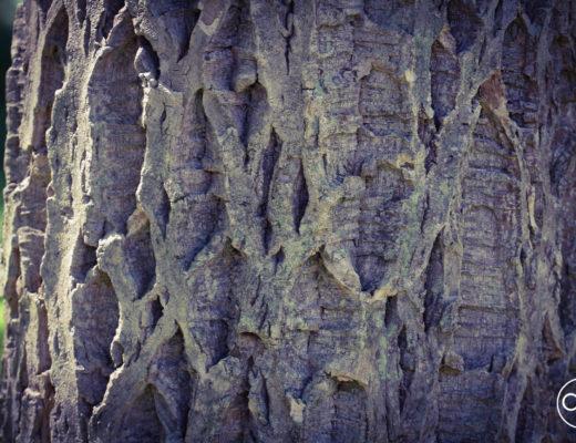 arboretum w Rogowie, SGGW, agnieskagertnerblog, Agnieszka Gertner, drzewa, ogród dendrologiczny, dendrologia, wycieczka, fotografia, natura, alpinarium, kolekcje drzew i krzewów, leśne powierzchnie doświadczalne, las naturalny, owady, entomologia