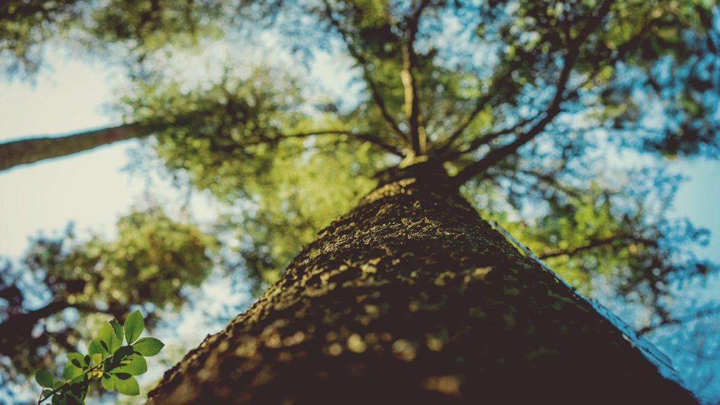 tajemna mowa drzew